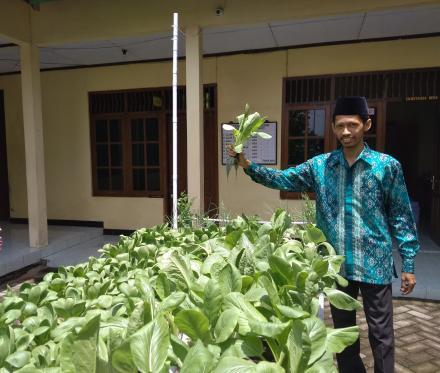 Panen Hasil Pertanian Hidroponik Desa Gadingharjo